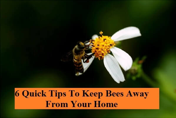 6 Quick Tips To Keep Bees Away From Your Home