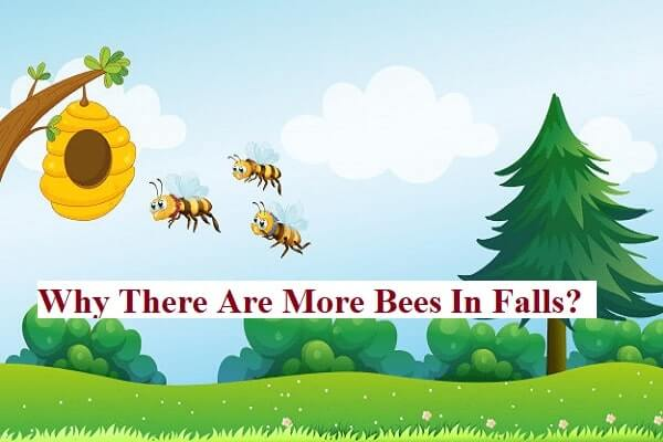 Why There Are More Bees In Falls?