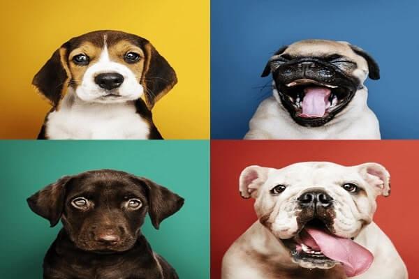 types of dog dye