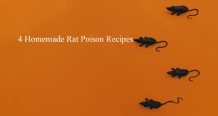 homemade rat poison