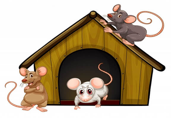 signs of presence of rats in home
